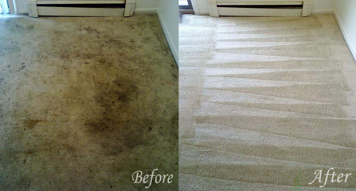 Carpet Cleaning Massachusetts The Steam Master